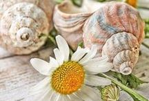 Shells are Swell  ✿ / from around the world