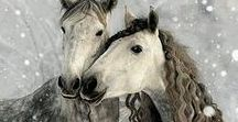 Horses ~ divine mirrors / I call horses 'divine mirrors' - they reflect back the emotions you put in. If you put in love and respect and kindness and curiosity, the horse will return that - Allan Hamilton