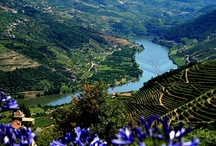 Douro Valley - 30 min. from Amarante / The famous Douro Valley, the area where the Douro Wines are born, is only located 30-40 minutes from Amarante and Casa da Calçada Relais & Chateaux.