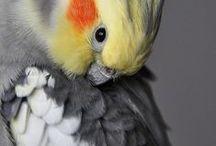 papugi / ptaki papugi