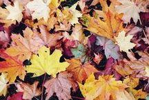 HELLO AUTUMN. / The leaves are falling.. Hello Autumn <3