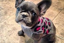 French Bulldogs / Because I want one! Or two ... OR FOUR!