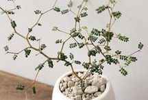 Jolies plantes