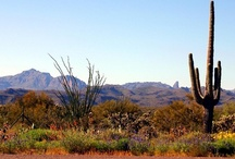 Arizona / Please add your Pins to our Pin board.  We are looking for unique images that show how different and unique Arizona is from the rest of the Country.   Thank you!!!!!!!