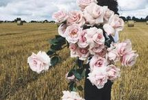 Flores inspiram