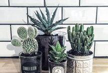 Cactus e Plantas