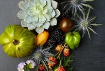 botanical STILL-LIFE