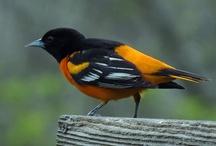 Nestle Inn B&B: Local Birds