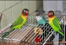 Animals / Animals, ducks, dogs, parrots, love birds....