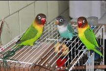 Animals / Animals, ducks, dogs, parrots, love birds....