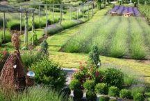 Okanagan Lavender & Herb Farm / Our beautiful farm in South Kelowna, BC, Canada