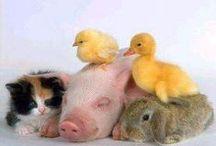 Animales varios