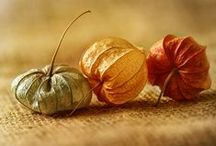Autumn Decor / Decorare in autunno