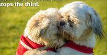 Healthy Homemade Doggie Treats / Home Remedies, Recipes For Fur Babies, Spoiled Pampered Shih Tzus, ... (pest / dogs)
