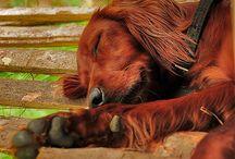 Dog / by Esther Yusta