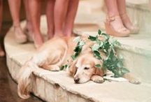 | Weddings & Pets | / Ways to incorporate your dog + other pets into your wedding