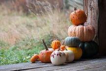 Ősz Fall Autumn