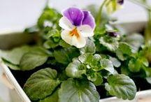 DIY: Blumen und Pflanzen / Urban Gardening ist eine Leidenschaft. Hier gibt es herrliche DIY-Ideen und Anleitungen mit wunderschönen Blumen und Pflanzen als Hauptdarsteller. Lasst euch verzaubern!
