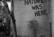 disaster natural