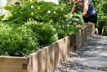 Garten: Ideen und DIY / Wunderschöne Garten-Ideen zum Selbermachen. Inspiration für kleine und große Gärten mit unterschiedlichen Blumen und Nutzpflanzen, Gehwege sowie Dekorationen