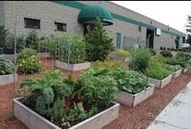 Landscape / We build organic raised bed vegetable gardens as an employee benefit for companies in eastern Massachusetts.