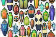 Insekter fjärilar