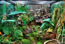 Awesome Reptile Exhibits / Awesome Reptile Exhibits from around the world! Some can be seen at The Serpentarium - A Living Reptile Museum