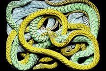 Reptile Artwork / Beautiful artwork made with reptiles.