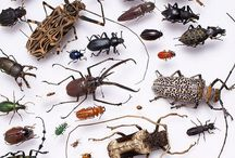 Insects / Beautiful insects from around the world!