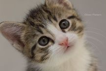 Cats / cute kitty's