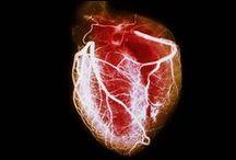 Szívbetegségek/Heart Disease