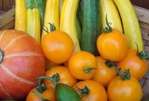 Harvest Bounty from Seed / Growing your own fresh vegetables from seeds brings beautiful and bountiful rewards at harvest time. / by Renee's Garden Seeds