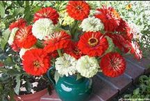 Flower Bouquets from Seed / Glorious bouquets all season long can be yours from seed / by Renee's Garden Seeds