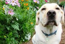 Our Animal Companions / The various animals who are our companions here at Renee's Garden Seeds / by Renee's Garden Seeds