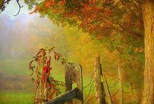 Seasonal: Autumn / by Tse Moana