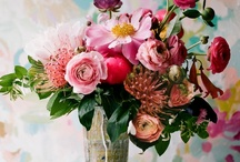 floral & nature / beautiful fresh and illustrated florals