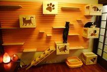 Cats / by Tse Moana