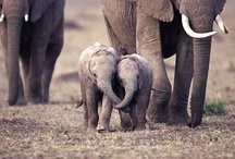 Elephants / by Melissa Sanders