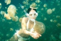 Scuba diving / kk / by Kazutaka Obika