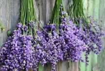 Lilacs and Lavender / by Elizabeth Vlach