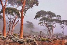 Garden | Eucalyptus / by Elizabeth