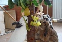Bunny stuff / Ideas and guides for house training a rabbit, food, toy, and safety ideas. / by Tracey Maree