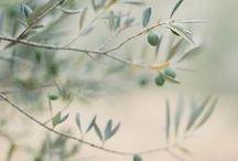 Garden | Olive Farm / by Elizabeth