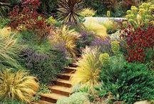 Garden | Slope & Courtyard / by Elizabeth