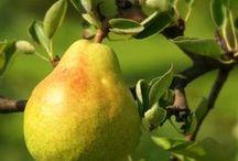 Garden | Fruit Trees / by Elizabeth