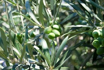 Eliris organic olives