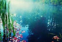 """pétales dentelles lumière / """"N'est-il pas suffisant de contempler un jardin si magnifique sans avoir à croire en plus que des fées l'habitent ?  Douglas Adams - extrait de """"Le guide du routard galactique"""" / by Nono Prtchtt"""