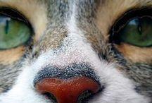 Bichos y Animales  / Animales, que maravillosas creaturas!