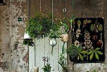 Botanic Beauty / We love plant power at Evolu!