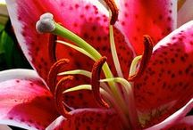 Fiori / Splendidi fiori da tutto il mondo.. Beautiful flowers from around the world ..